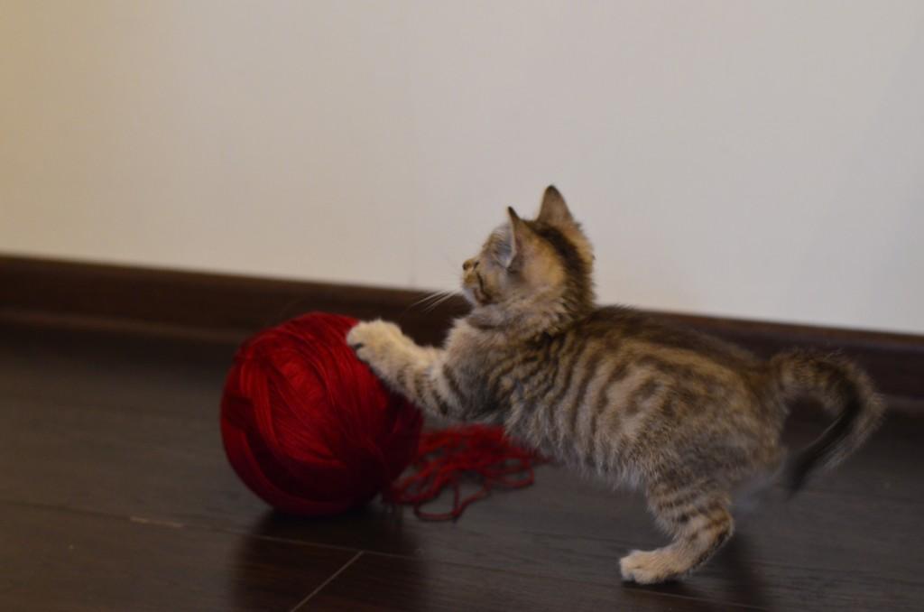 играем с клубочком:)